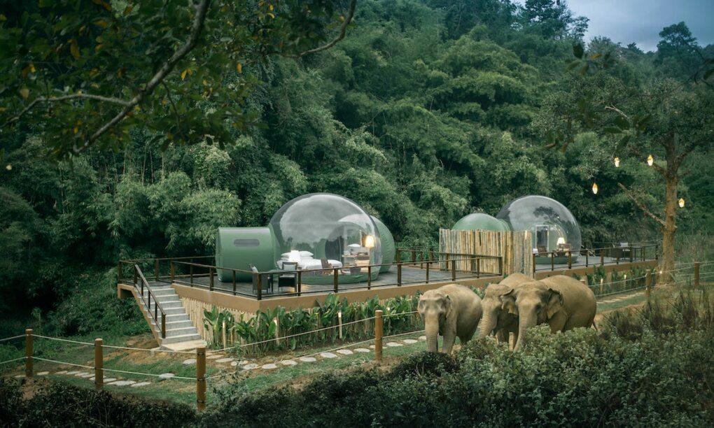 Je kunt nu in deze Jungle Bubble slapen in Thailand omringd door Olifanten