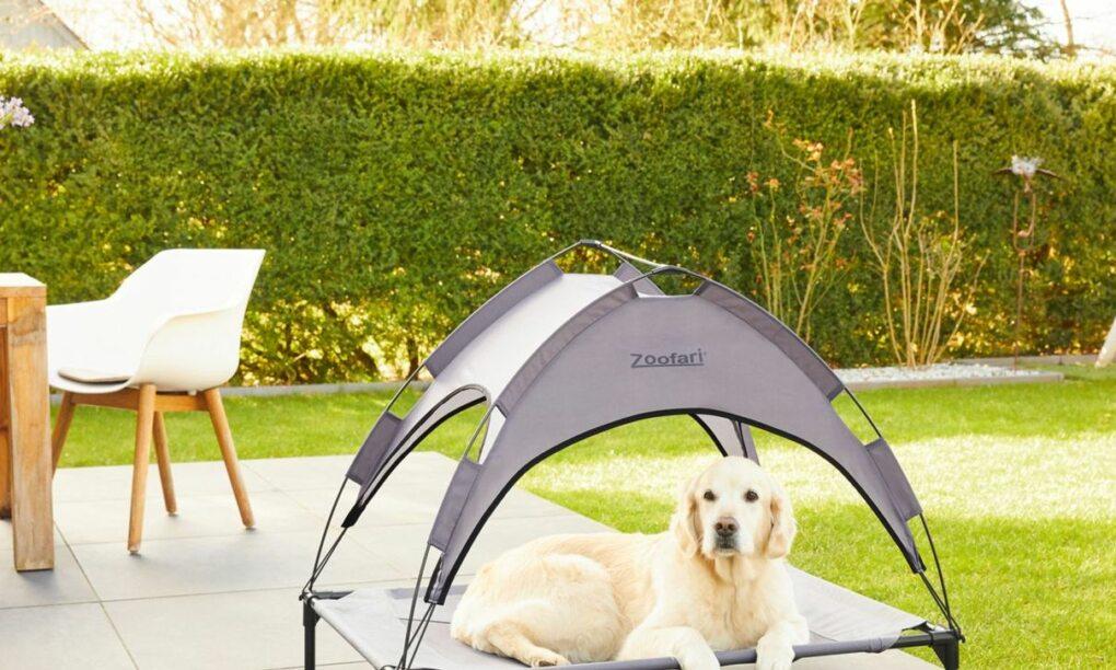Dit hondenbed van de LIDL zorgt dat jouw hond de hete zomer doorkomt11